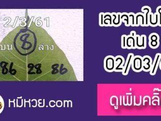 เลขใบโพธิ์2/3/61